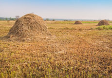 Haystacks on the meadow Royalty Free Stock Images