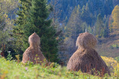 Haystacks in mountain field in Ukraine Royalty Free Stock Photo
