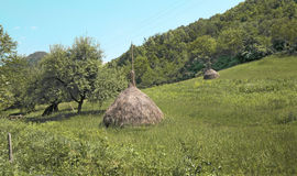 Haystacks Stock Image