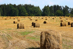 Haystacks na łące Zdjęcie Stock
