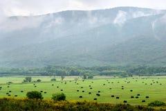 Haystacks na łące przez mgłowych wzgórza Zdjęcia Royalty Free