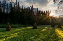 Haystacks na lasowej łące w Wysokim Tatras Fotografia Royalty Free