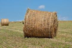 Haystacks na polu po żniwa Obraz Stock