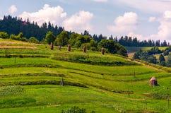 Haystacks na trawiastych skłonach w obszarze wiejskim Fotografia Royalty Free
