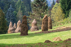 Haystacks near the forest Royalty Free Stock Photo