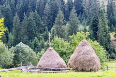 Haystacks near the forest. On plot with wooden fence. Ukrainian village Krivopolye in Carpathian Mountains stock image