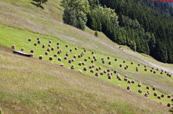 Haystacks near Kartitsch in Gailtal, Austria. Mowed grass is collected in hayricks for drying against agricultural slopes in Austrian Gailtal near Kartitsch. The Stock Photos