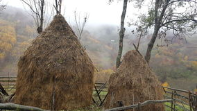 Haystacks, piled hay. Autumn day. Nature Royalty Free Stock Photography