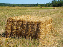 Haystacks po całym pole Obrazy Royalty Free