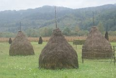 Haystacks in Romania on a Misty Morning. These cone-shaped haystacks were in the mountains of Romania on a misty morning Royalty Free Stock Photo