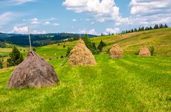 Haystacks in a row on a grassy field. Beautiful rural scenery in summer. ecologycal agriculture concept Stock Image