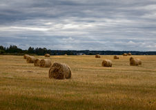 Haystacks. Russian field. Overcast. Royalty Free Stock Photos