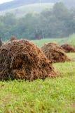haystacks rząd Obrazy Stock