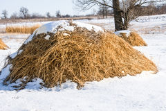 Haystacks in the snow at winter in the village Royalty Free Stock Images
