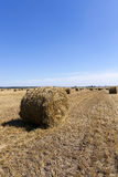 Haystacks straw . cereal Stock Photography