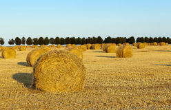Haystacks straw.  cereal Royalty Free Stock Photography