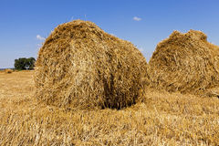 Haystacks straw  in  field Royalty Free Stock Image