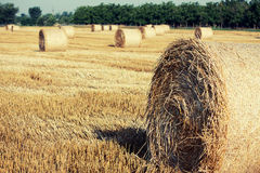 Haystacks. Straw left after harvesting wheat, Field Landscape with Rolls and Sky, Agriculture Concept Stock Photography