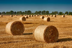 Haystacks. Straw left after harvesting wheat, Field Landscape with Rolls and Sky, Agriculture Concept Royalty Free Stock Image
