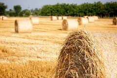 Haystacks. Straw left after harvesting wheat, Field Landscape with Rolls and Sky, Agriculture Concept Royalty Free Stock Photo
