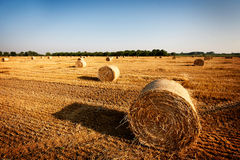 Haystacks. Straw left after harvesting wheat, Field Landscape with Rolls and Sky, Agriculture Concept Royalty Free Stock Photography