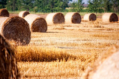 Haystacks. Straw left after harvesting wheat, Field Landscape with Rolls and Sky, Agriculture Concept Stock Photos