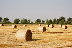 Haystacks. Straw left after harvesting wheat, Field Landscape with Rolls and Sky, Agriculture Concept Royalty Free Stock Photos