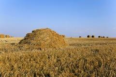 Haystacks straw , summer Royalty Free Stock Image