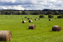 Haystacks in sunlight Stock Image