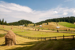 Haystacks. Traditional haystacks from a mountain village in Apuseni Mountains, Romania Royalty Free Stock Photos