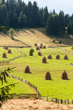 Haystacks. Traditional haystacks from a mountain village in Apuseni Mountains, Romania Stock Images