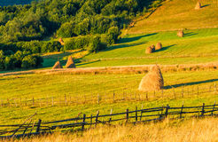 Haystacks and a trees on a hillside meadow. Haystacks and a trees behind the fence on a hillside meadow. beautiful summer morning in counrtyside Royalty Free Stock Image
