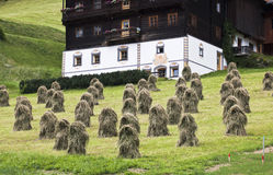 Haystacks in Tyroler Gailtal, Austria. Mowed grass is collected in hayricks for drying against agricultural slopes in Austrian Gailtal near Kartitsch. The Royalty Free Stock Images