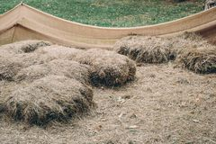 Haystacks used as resting place. On a farm stock image