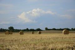 haystacks w polu Fotografia Royalty Free