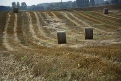 haystacks w polu Obrazy Stock