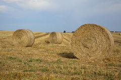 haystacks w polu Zdjęcia Royalty Free
