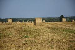 haystacks w polu Obraz Royalty Free