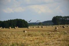haystacks w polu Zdjęcie Stock