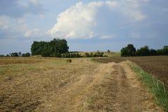 haystacks w polu Zdjęcie Royalty Free
