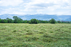 Haytime in the field of Pyrenees Stock Photography