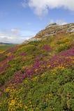 Haytor e urze, Dartmoor Imagem de Stock