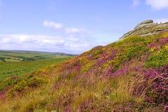 Haytor ed erica, Dartmoor Immagine Stock