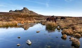 Haytor, Nationaal Park Dartmoor stock afbeelding