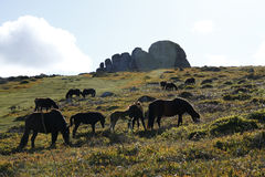 Haytor Rocks & Dartmoor Ponies Royalty Free Stock Photography