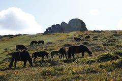 Haytor Rocks & Dartmoor Ponies Royalty Free Stock Photography