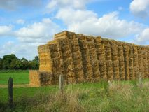 Haywall. Bales of hay stacked in a field forming a wall Stock Photos
