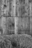 hayward zdjęcia stock