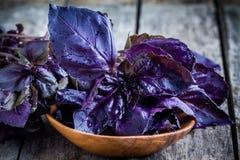 Haz de la albahaca púrpura en el cuenco Fotografía de archivo libre de regalías
