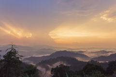 Haz de la puesta del sol en bosque después de la tormenta de la lluvia. Foto de archivo
